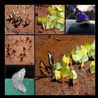 südamerikanische Schmetterlinge