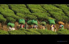 Südindien 08
