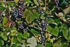 Süsse Herbstfrüchte