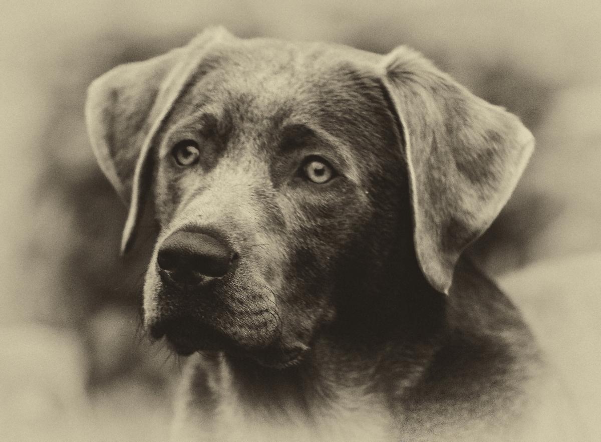 ..süße Hundeschnauze..