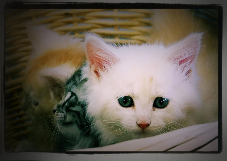 Katzenbabys Bilder Kostenlos