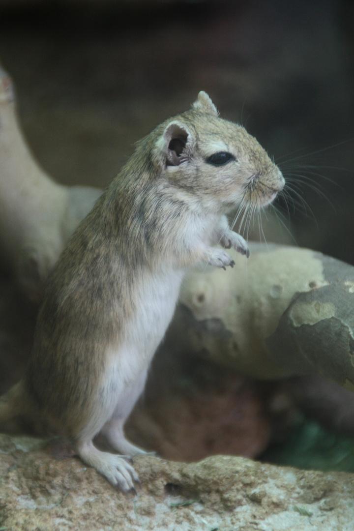 Süße Maus Foto Bild Tiere Zoo Wildpark Falknerei Säugetiere