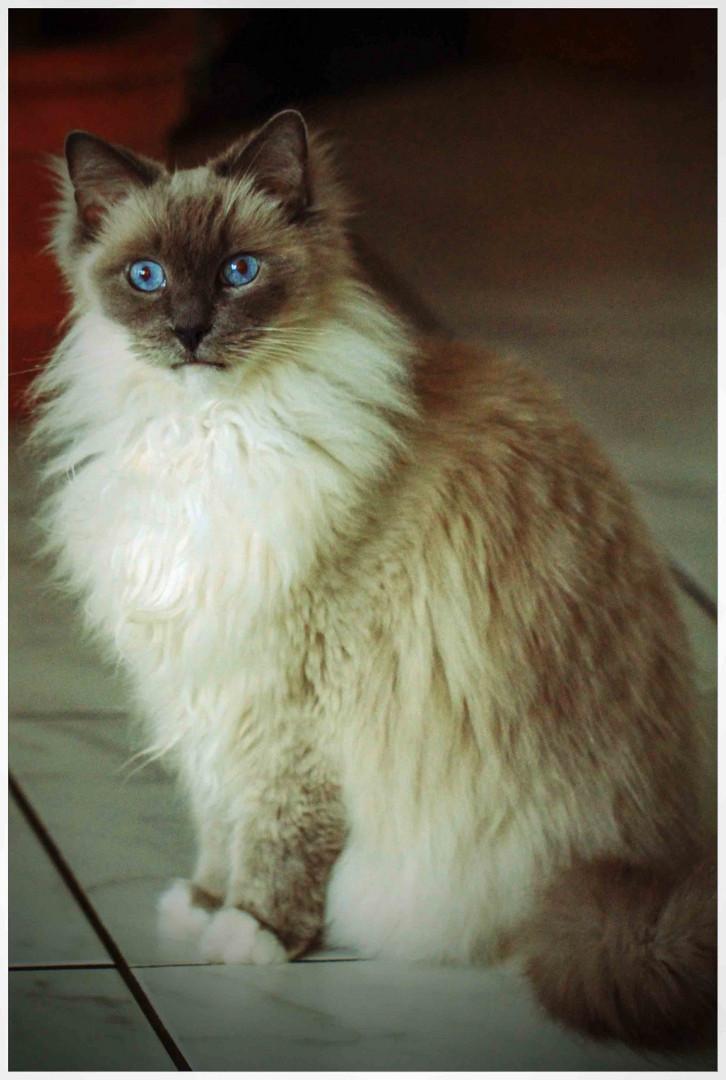 Süße Maus Foto Bild Tiere Haustiere Katzen Bilder Auf