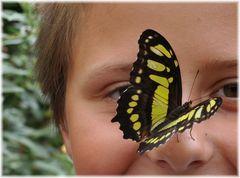 Süße Nase sprach der Schmetterling und lies sich nieder