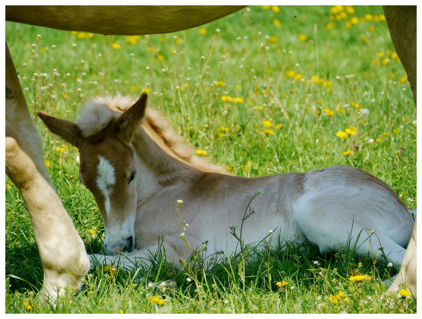 Süße Träume Foto Bild Tiere Tierkinder Pferde Bilder
