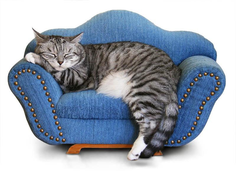 s e tr ume reload foto bild tiere haustiere katzen bilder auf fotocommunity. Black Bedroom Furniture Sets. Home Design Ideas