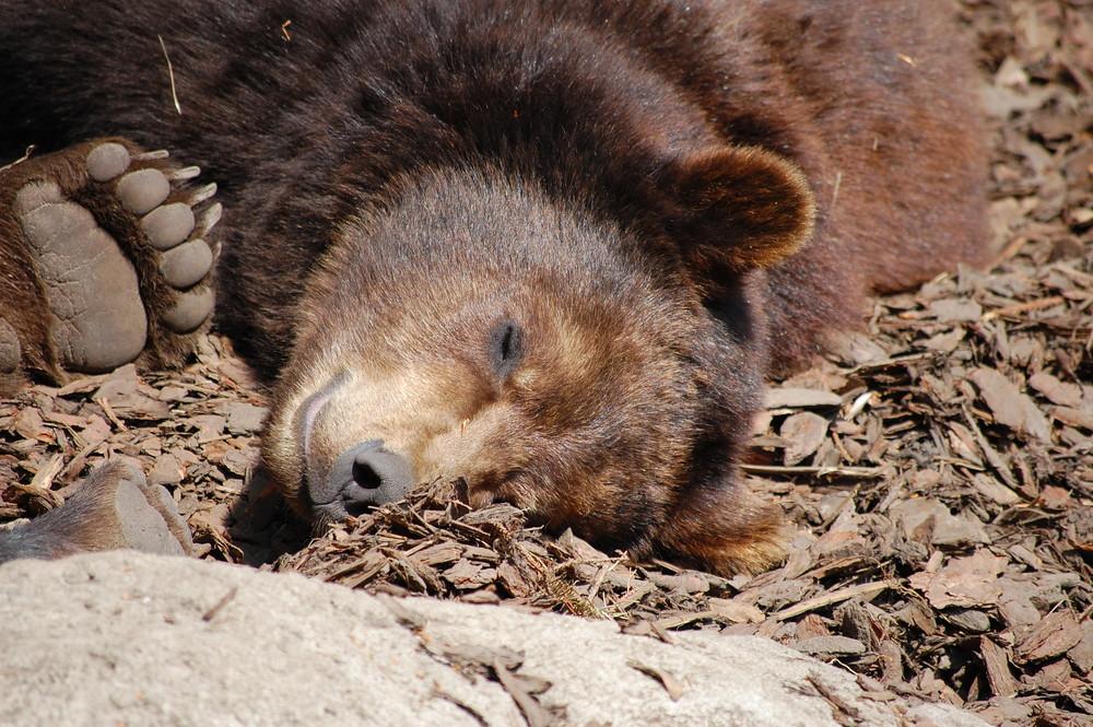 süßer Teddybär ;-)