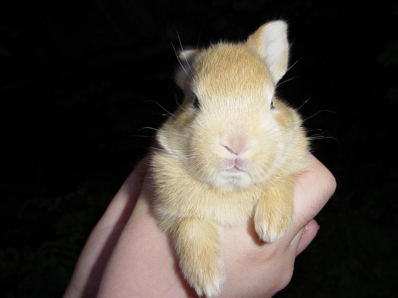 Süsses, junges Kaninchen