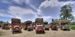 sugar-trucks