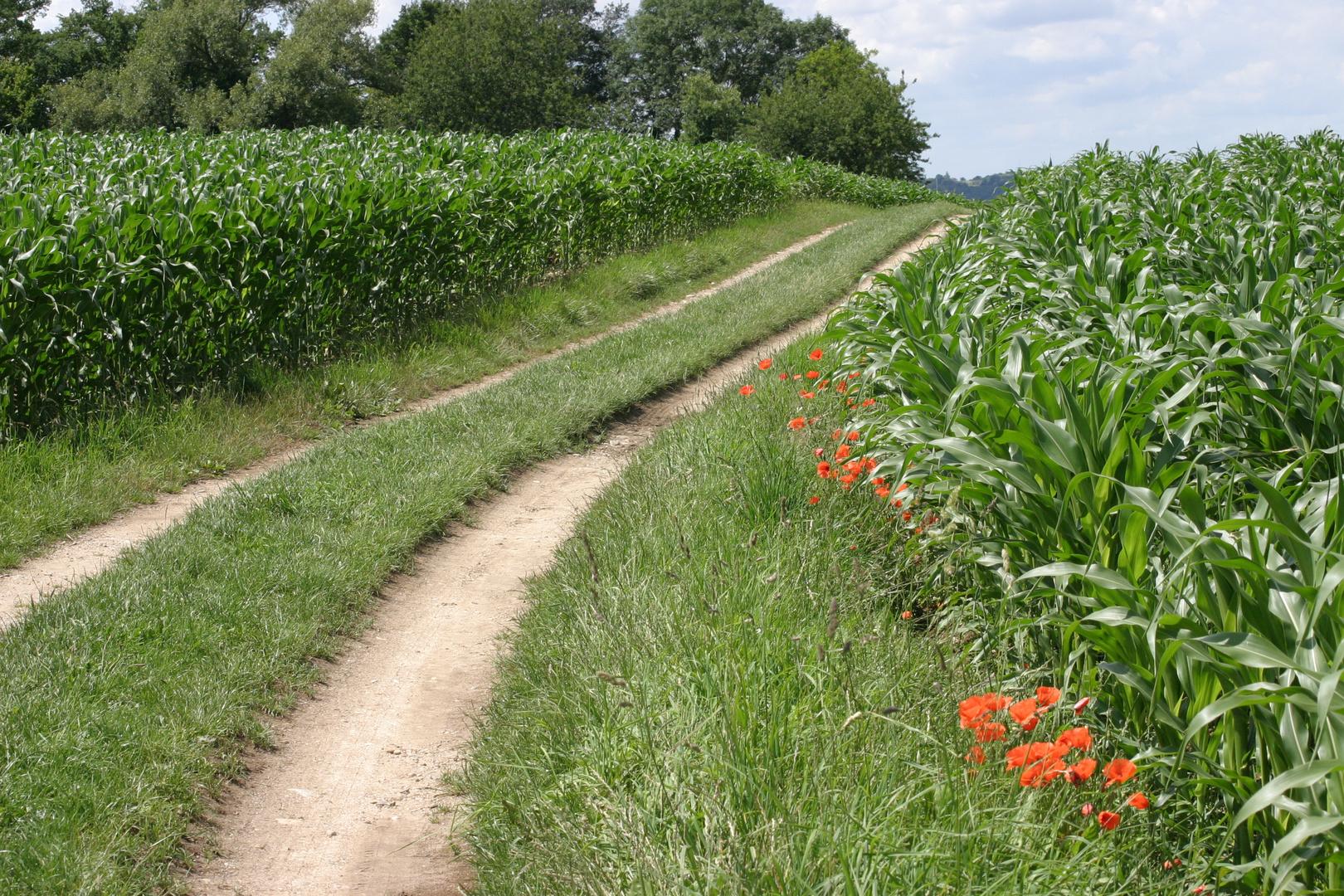 Suivez le chemin