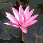 Sukhothai, pure Beauty