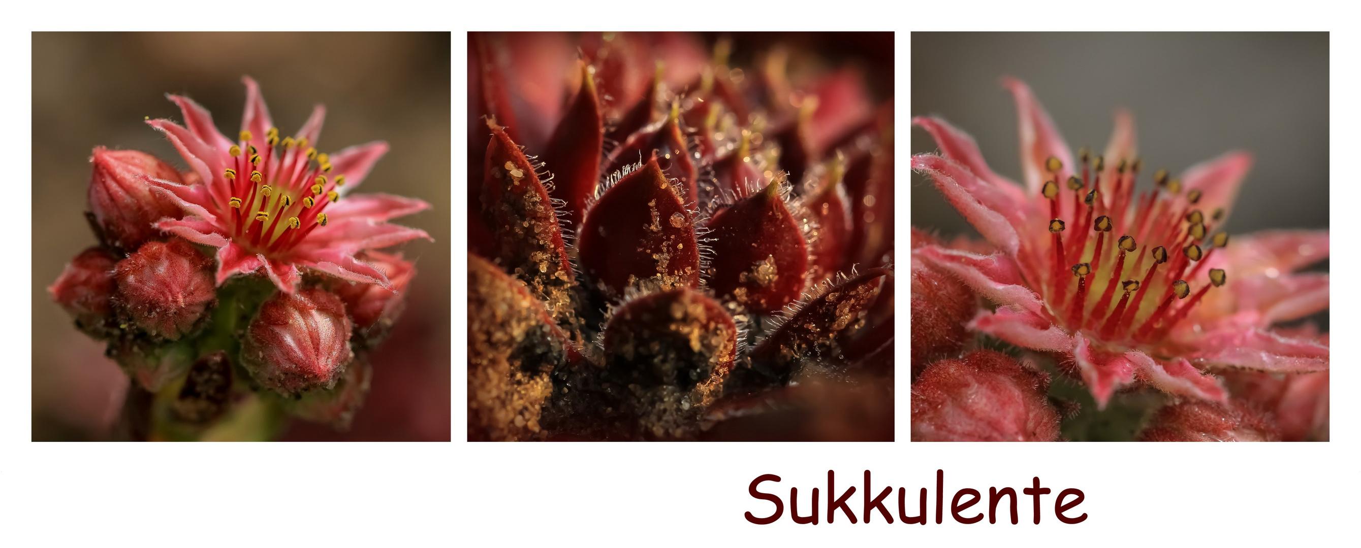 Sukkulente Blüten