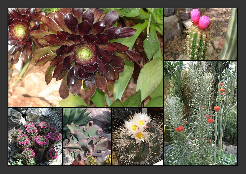 sukkulenten collage foto bild pflanzen pilze flechten kakteen sukkulenten natur. Black Bedroom Furniture Sets. Home Design Ideas