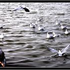 Sul Lago di Lesina