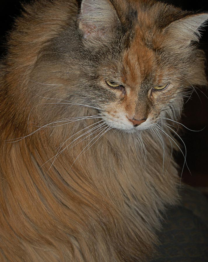 Sullen Feline