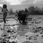Sumatra - Feldarbeit