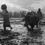 Sumatra - Reisbauern