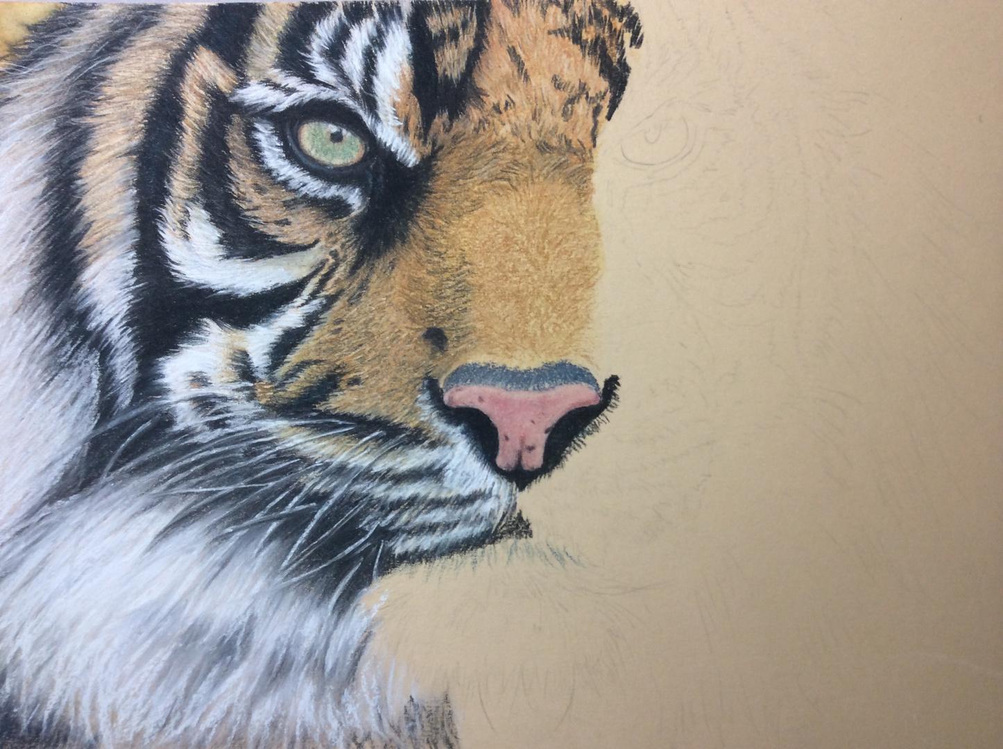 Sumatra Tiger in Pastell - noch in Arbeit