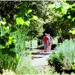 Summer at Quiet Waters - Strolling through the Park