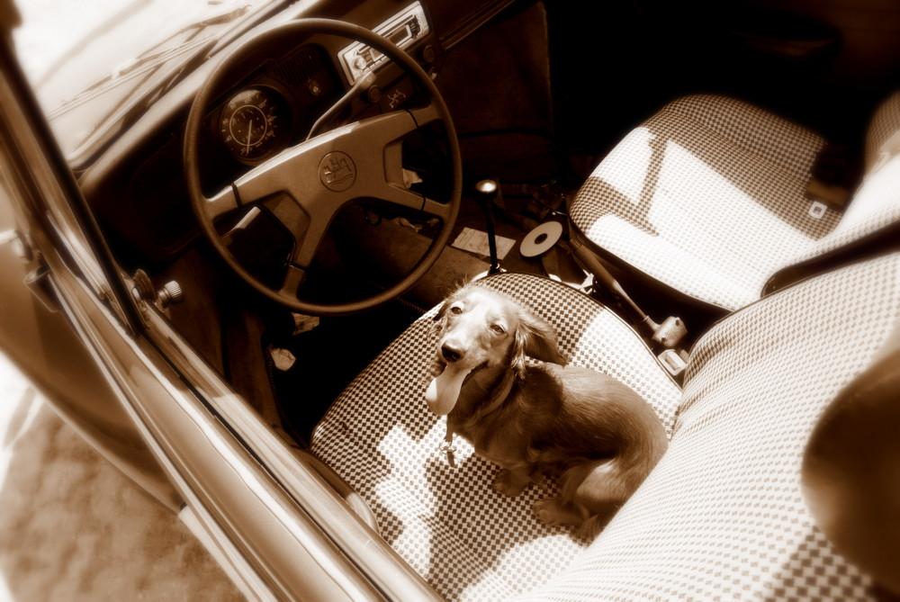 Summer drivin'...