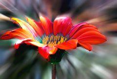 [summer]-flower