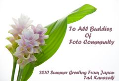 Summer Greeting From Japan