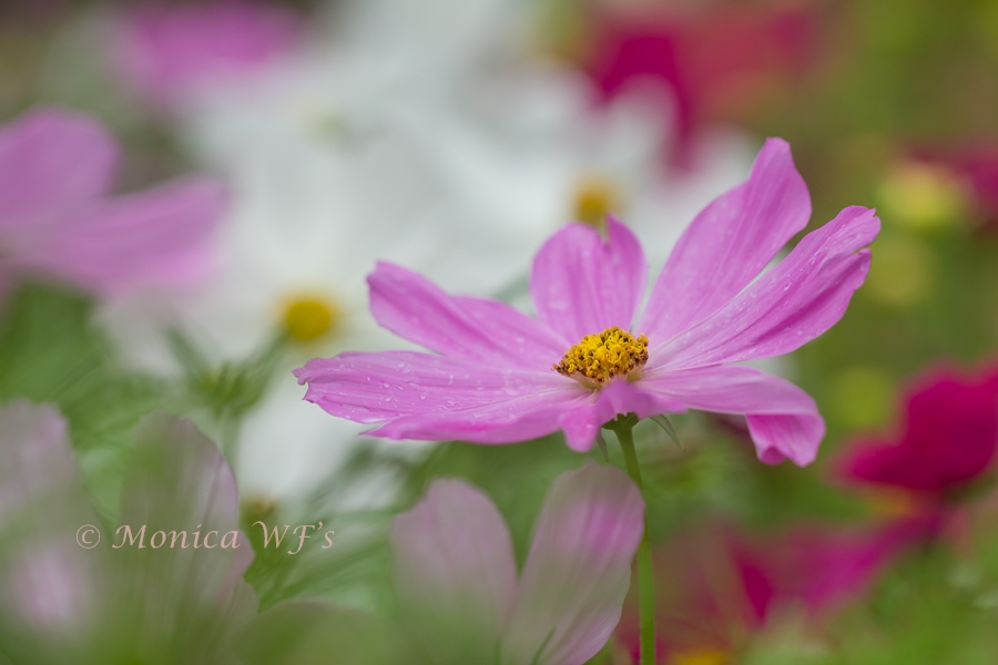 Summer in Pink ....