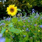 ...Summer outlook....