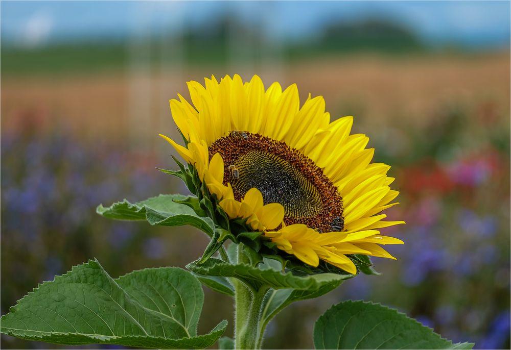 *Summer Sunshine*