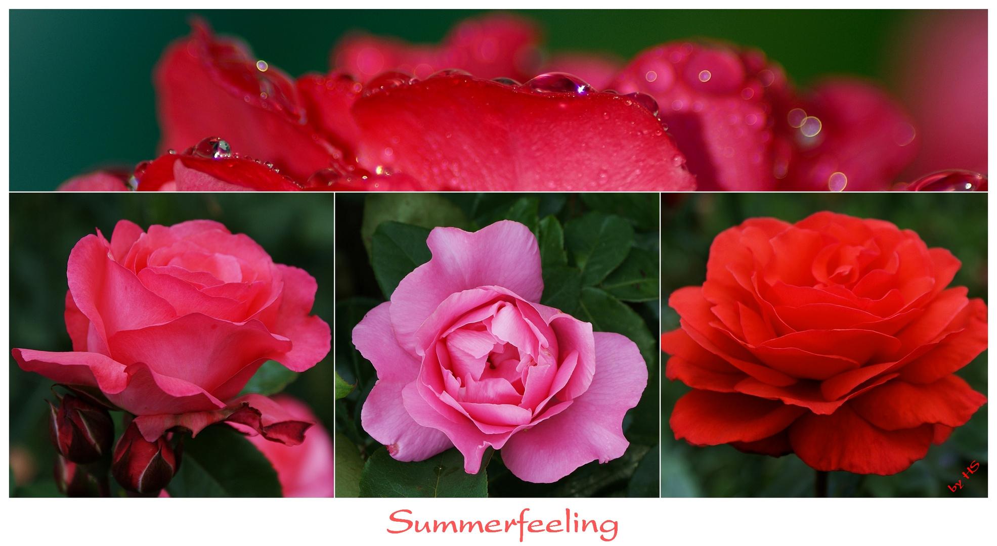 Summerfeeling...