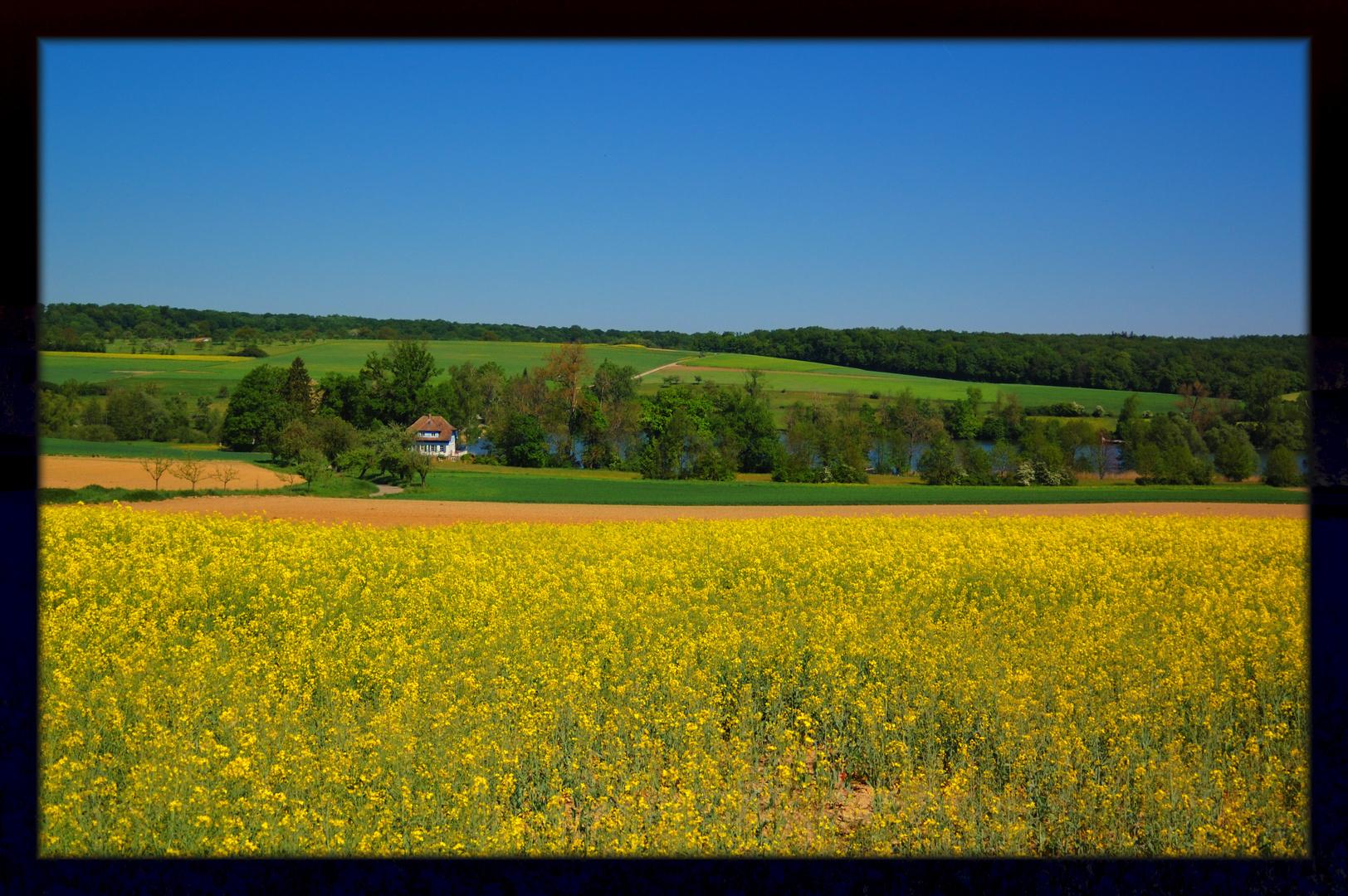 summerfields