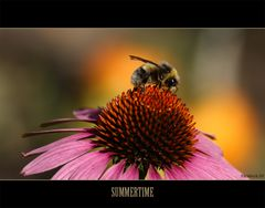Summertime....
