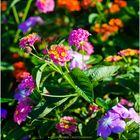 Summertime Blossoms - No.1