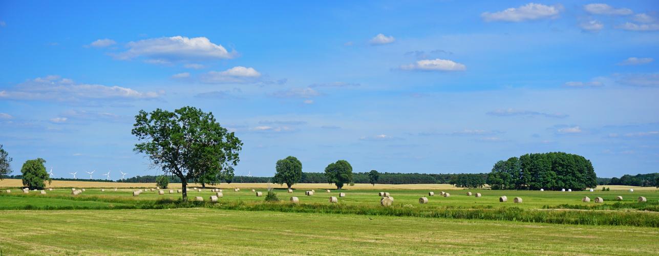 Summertime im Spreewald