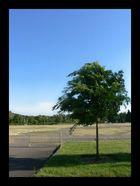 -summertree-