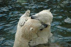 Sumo-Ringer im Eisbärenkostüm