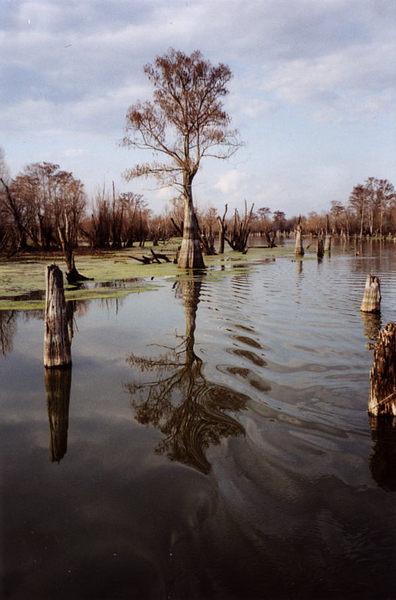 Sumpfgebiet