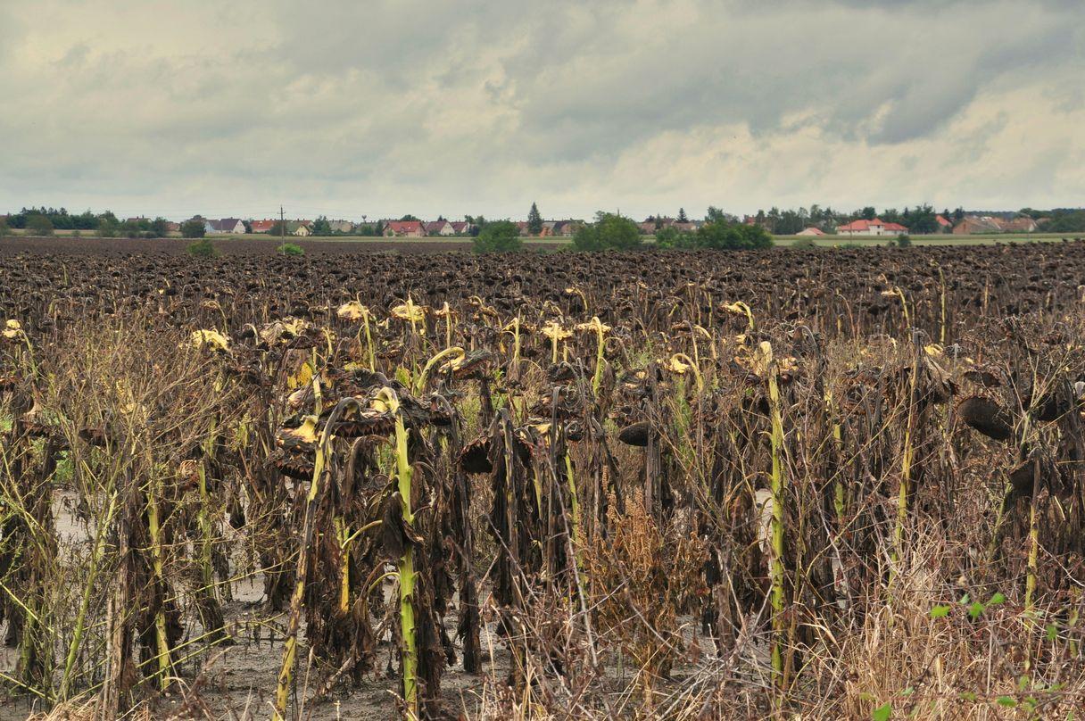 Sumpfpflanzen