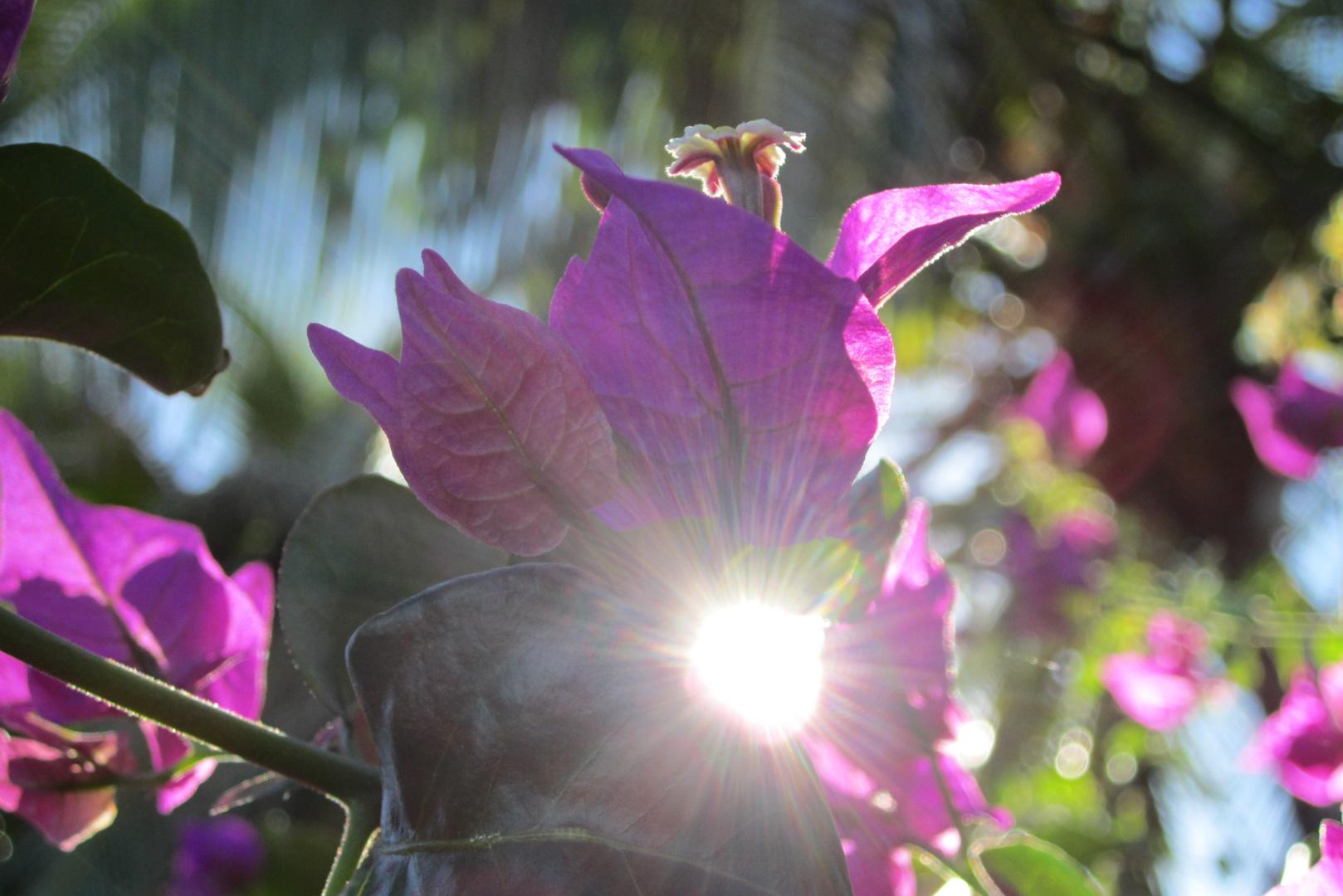Sun-Flower?