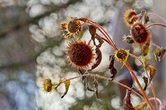 sun flower nutrition for the birds