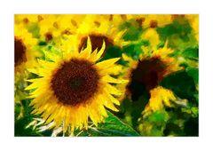 sun-flower- Sonnenblume -