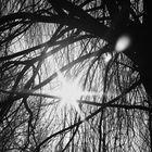 sun framed II