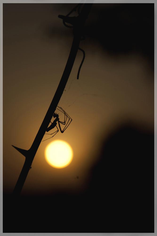 sun hunting