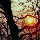 Sun in trap