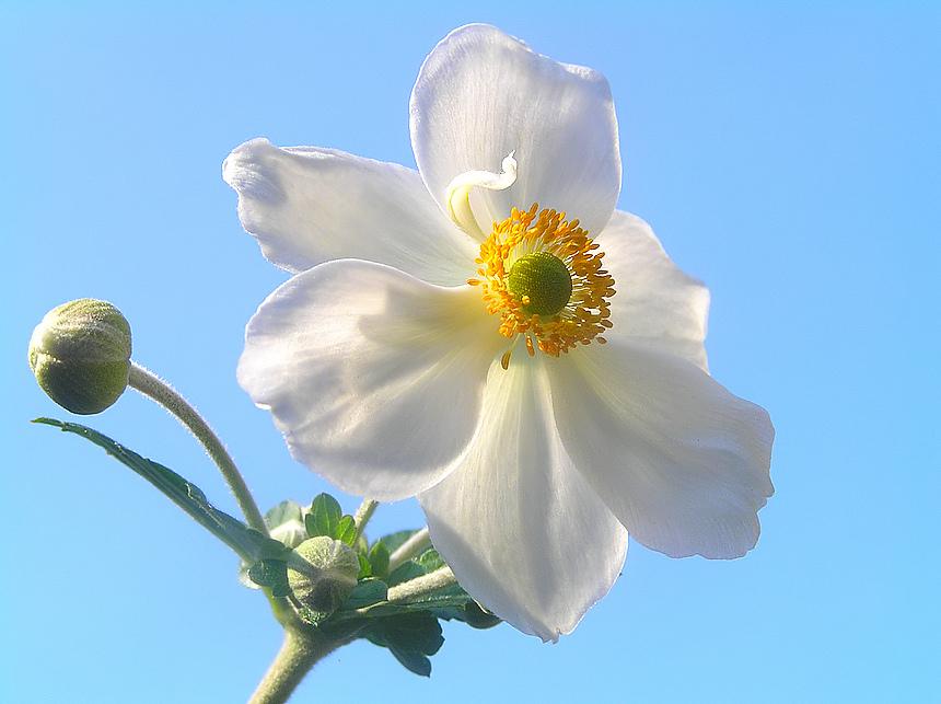 Sun light lady