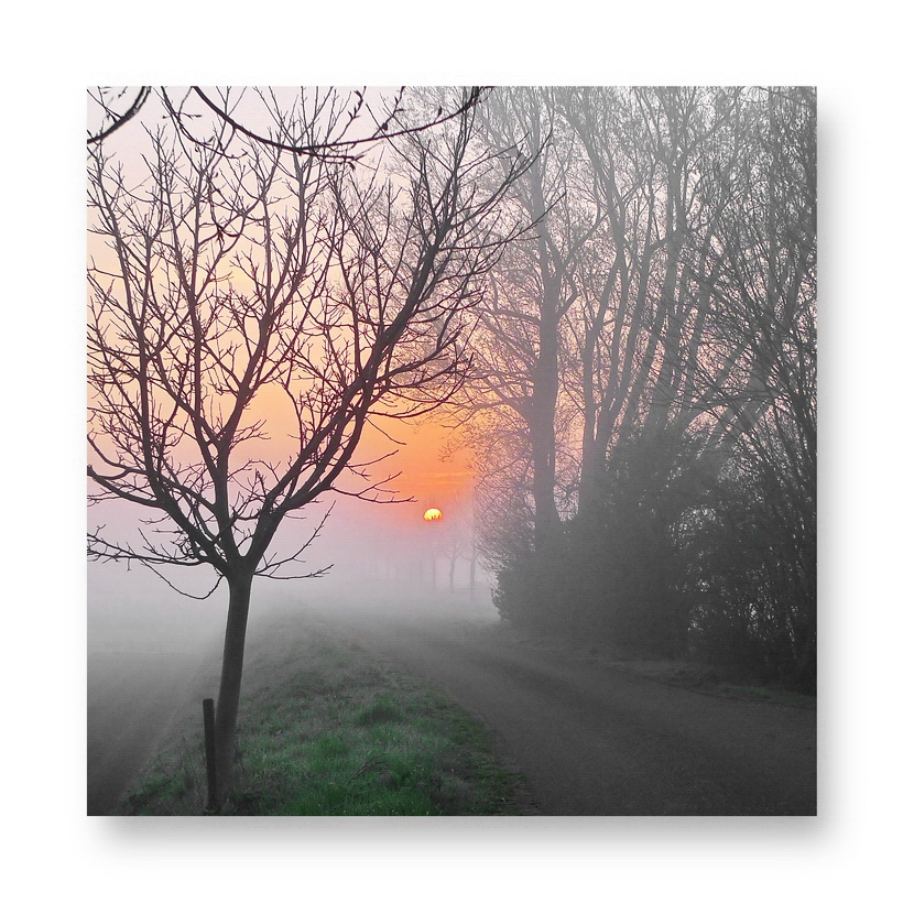Sun Rising (Morgenrot) 12.04.2012, 07:27:54 (Oranjedijk)
