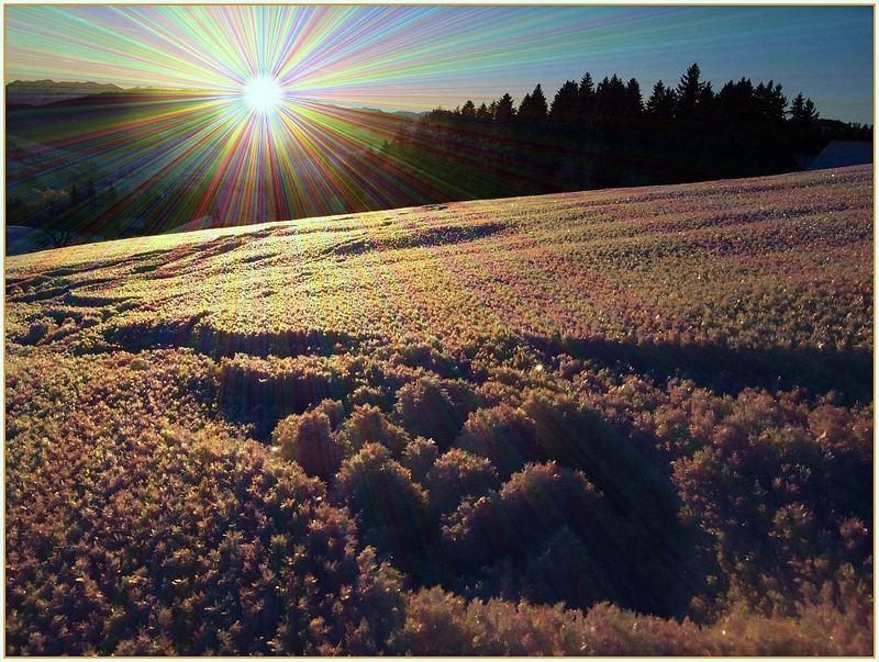 SUN & Snowflakes