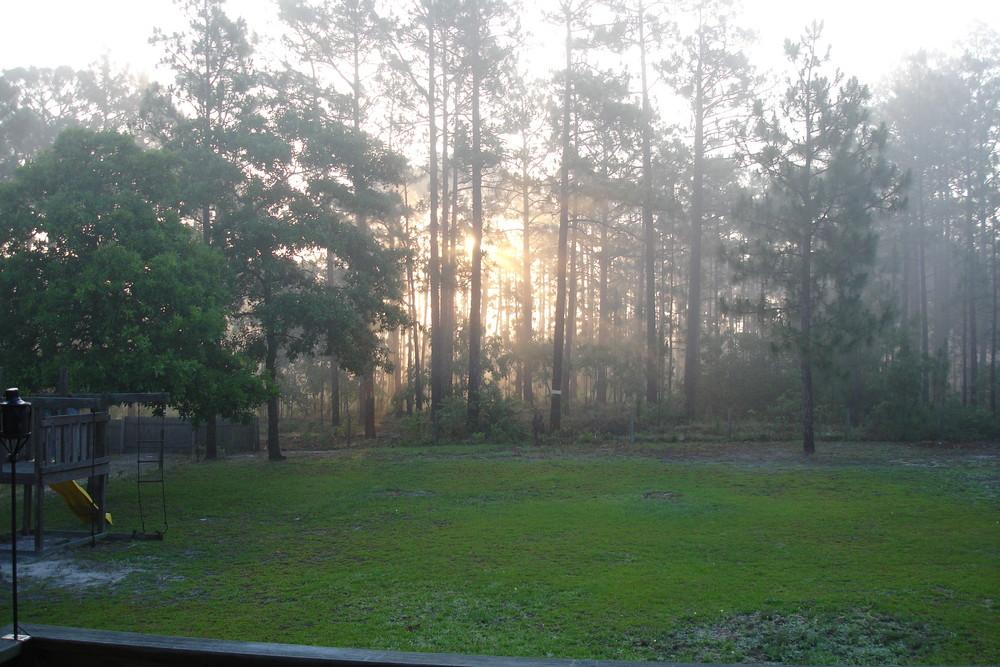 Sun Thru the Trees/Fog