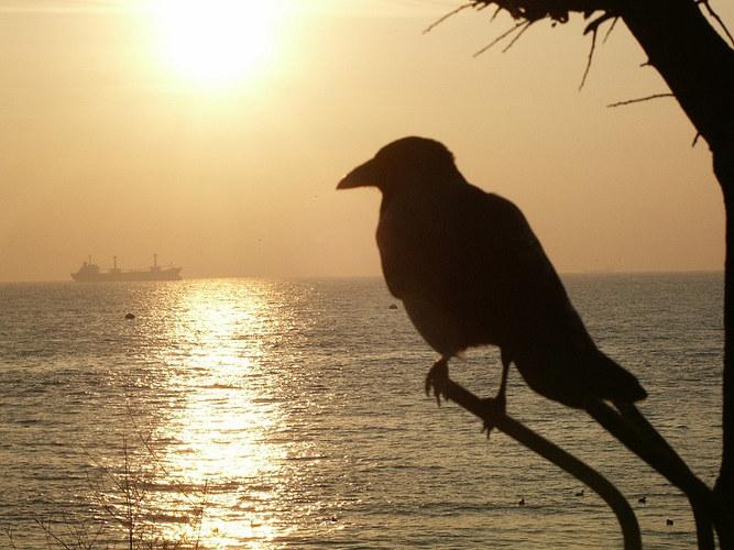 Sunbird in Istanbul