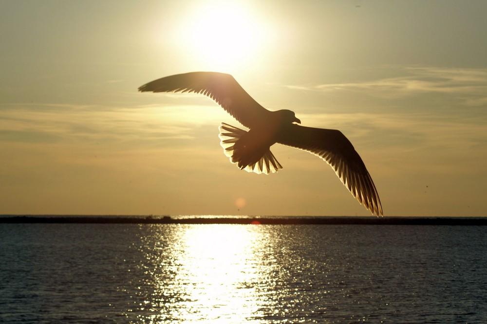 SunBird Spirit